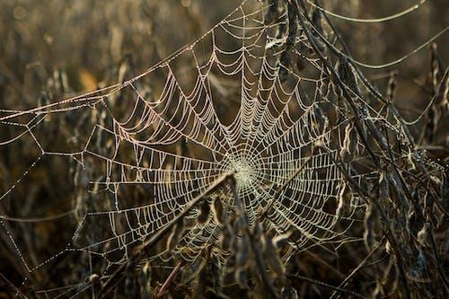 Gratis stockfoto met spin, telaarañas, webs