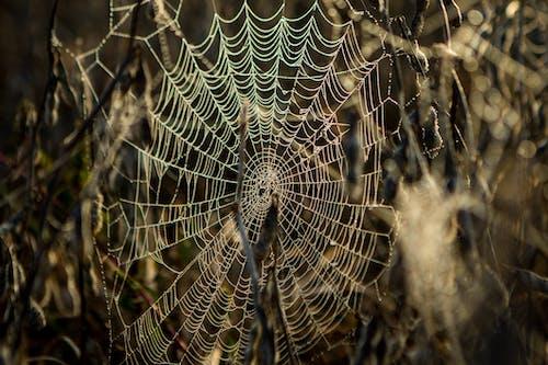 örümcek, telaarañas içeren Ücretsiz stok fotoğraf