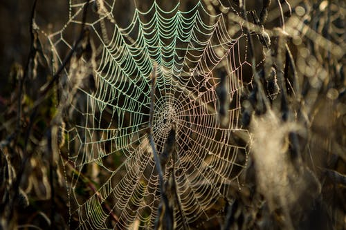 Fotos de stock gratuitas de araña, telaarañas, webs