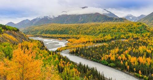 Foto stok gratis awan, bukit, daun gugur, daun jatuh