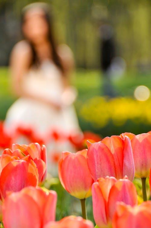 Foto stok gratis bunga, bunga tulip, kaum wanita, kontras
