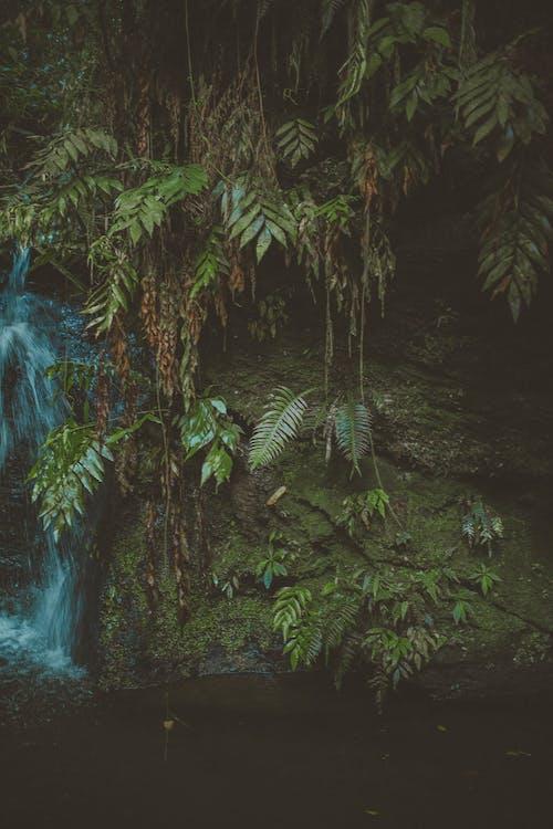 Immagine gratuita di acqua, ambiente, cascate, colori