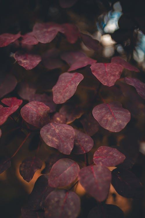 Nahaufnahmefoto Von Blättern