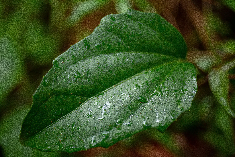 Základová fotografie zdarma na téma déšť, dešťová kapka, dešťové kapky, kapky vody
