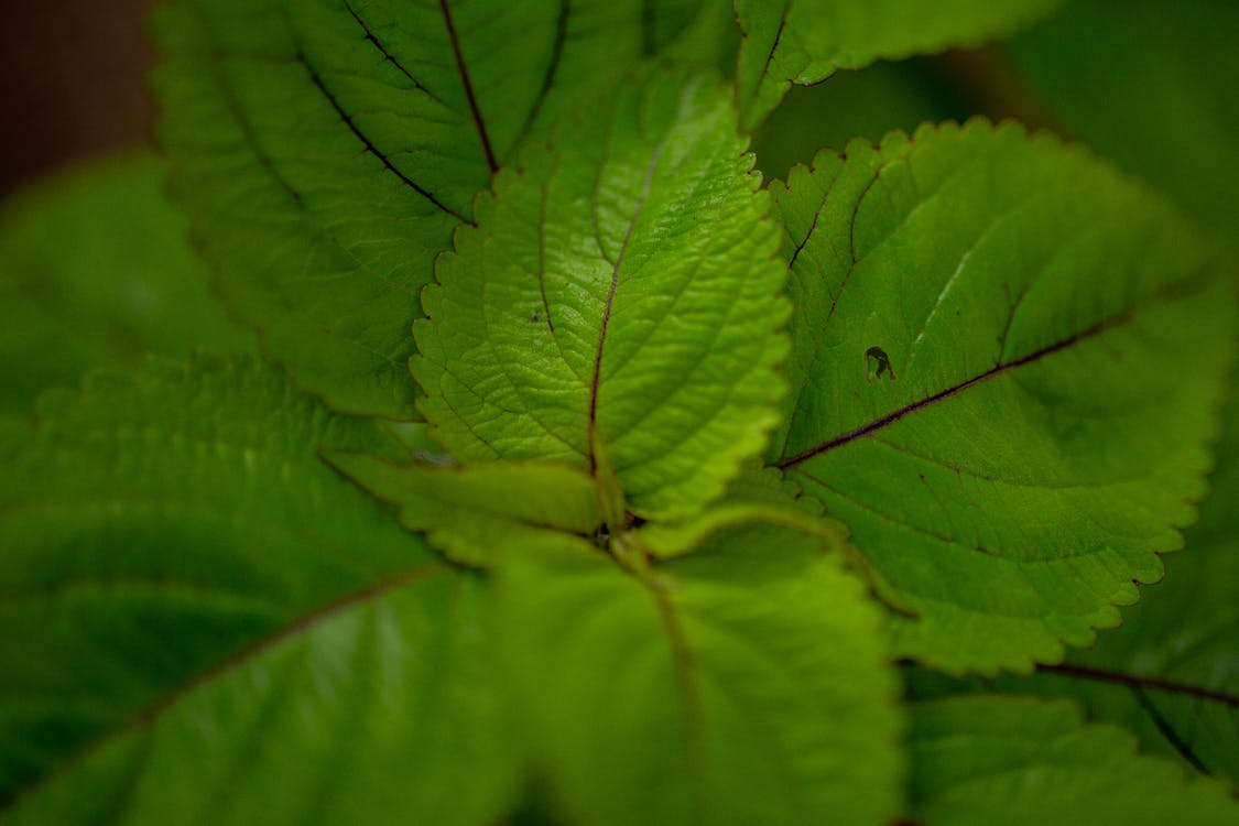 Close-up Photography of Green-leafed Plant