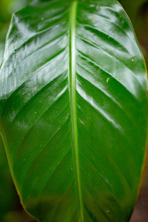 Безкоштовне стокове фото на тему «біологія, ботанічний, великий план, зелений»
