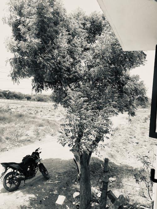 Ảnh lưu trữ miễn phí về cây đen, cây với xe đạp