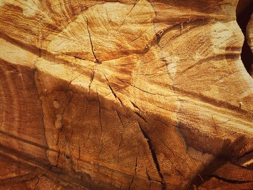 Free stock photo of bark, beauty in nature, nature