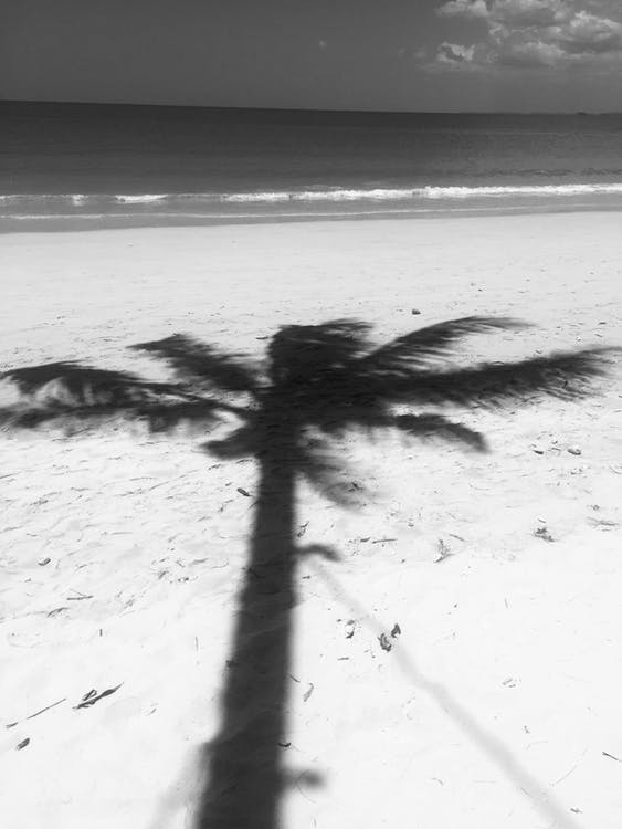 Photo of Palm Tree Shadow on Seashore