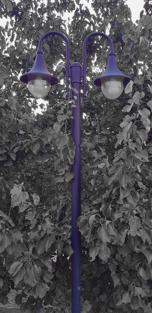 Free stock photo of garden, garden light, garden lights