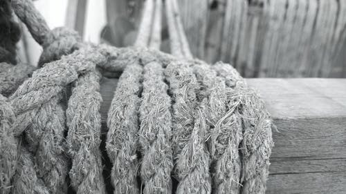 Free stock photo of black and white, drift wood, garden
