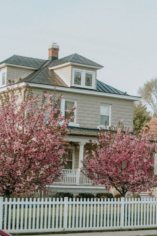 Free stock photo of bloom, blooming tree, hometown, house