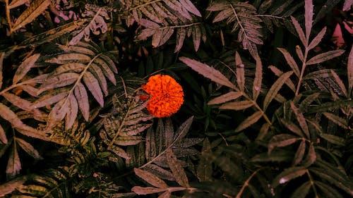 景深, 植物群, 樹葉, 漆黑 的 免费素材照片