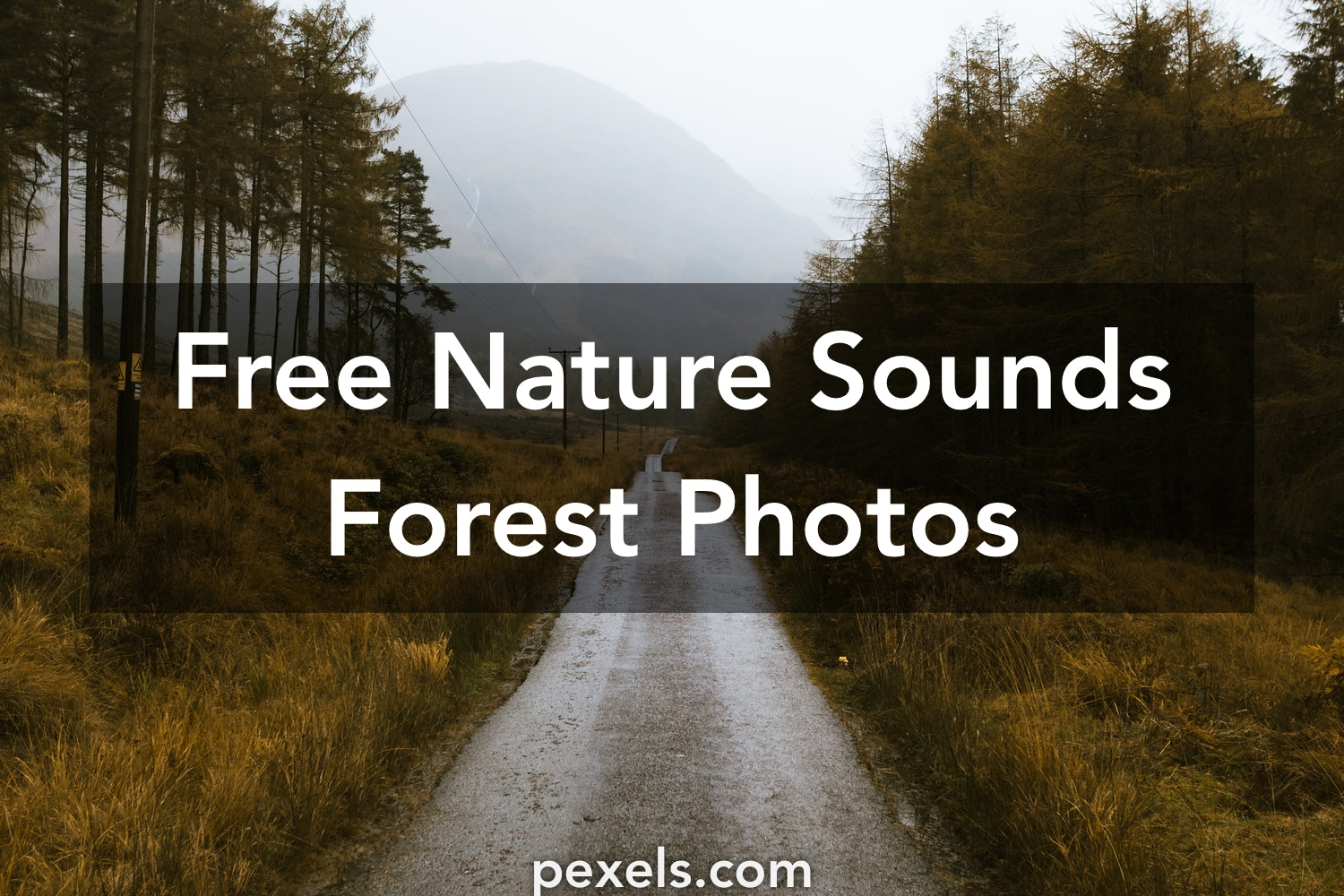 1000+ Engaging Nature Sounds Forest Photos · Pexels · Free Stock Photos