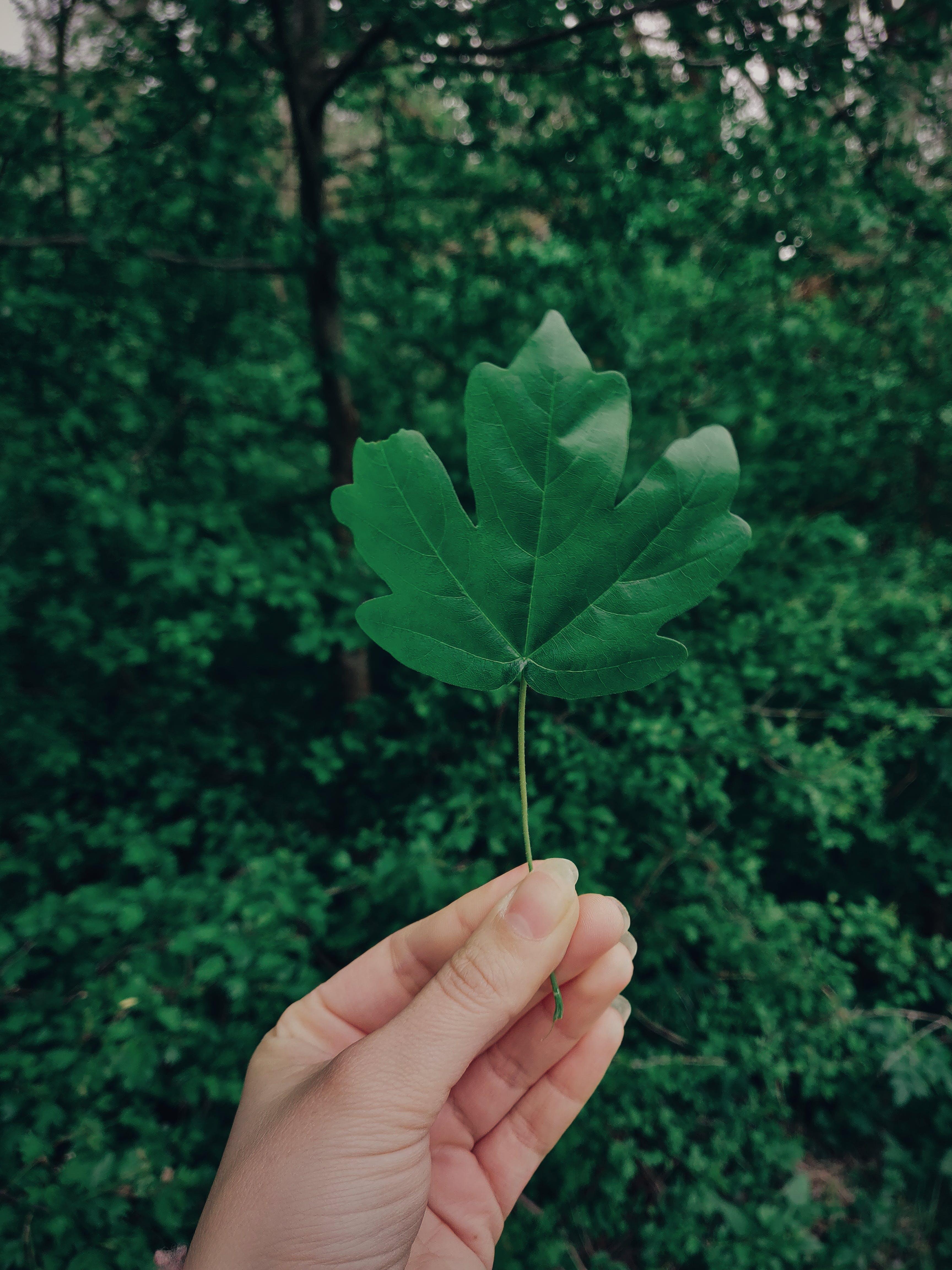 ハンド, 緑, 葉の無料の写真素材