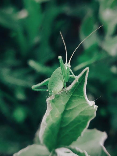 夏天, 夏季, 天性, 害蟲 的 免費圖庫相片