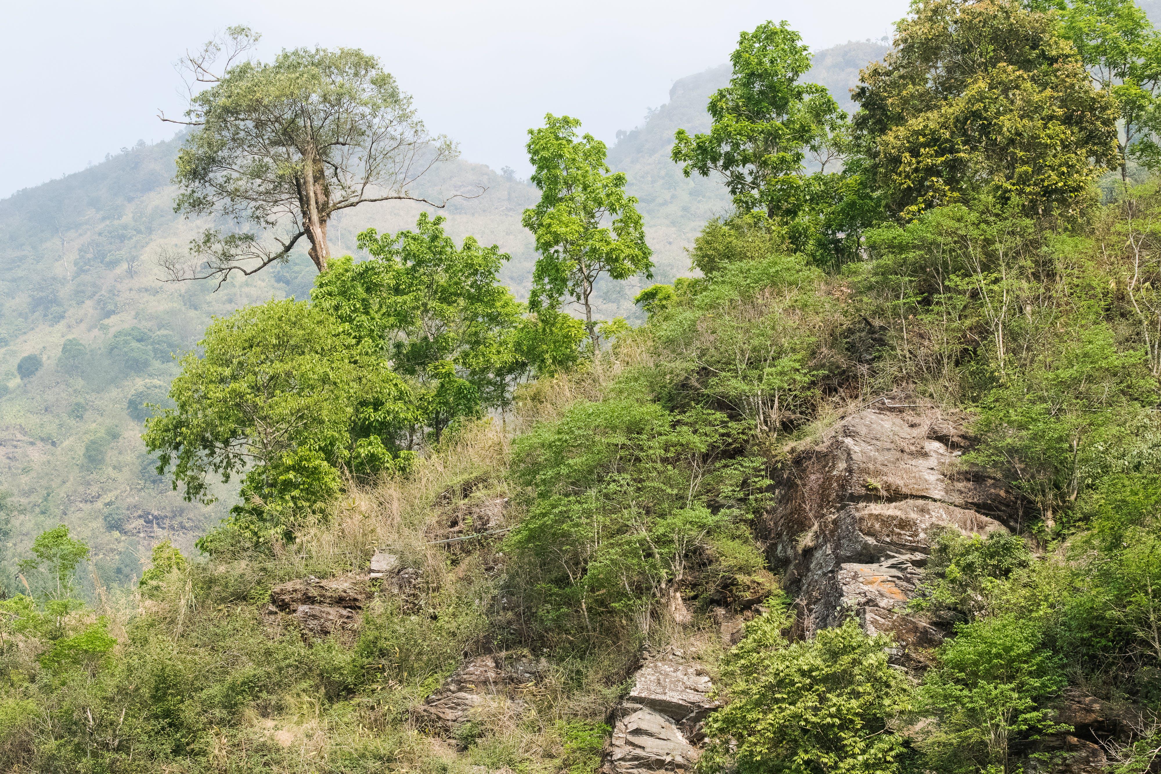 Kostenloses Stock Foto zu baum, berg, himalaya, hügel