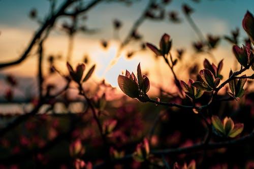 Darmowe zdjęcie z galerii z #natura, estetyka, piękny