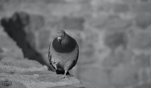 Základová fotografie zdarma na téma černobílá, ptačí budka, pták