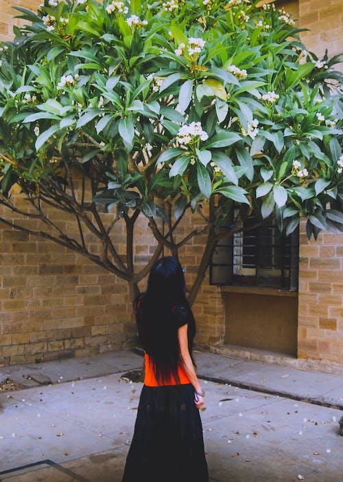 のんき, アジア人の女の子, 気軽に, 美しい花の無料の写真素材