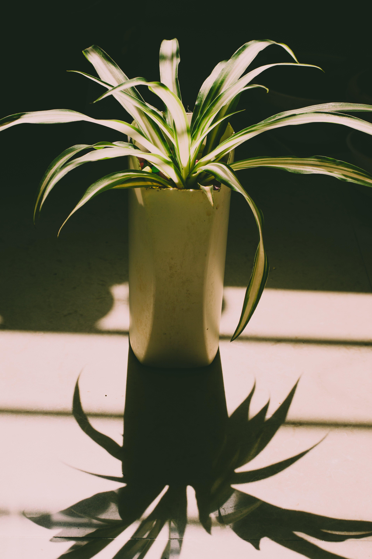 Ảnh lưu trữ miễn phí về ánh sáng ban ngày, bóng, cái bình hoa, cây nhà