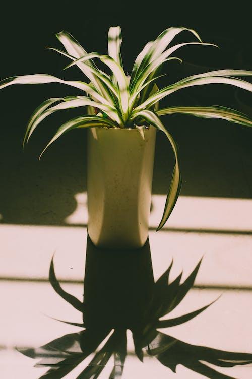 Gratis arkivbilde med anlegg, atskilt, blader, botanisk