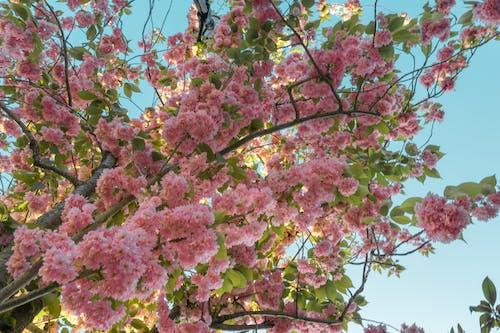 꽃, 나무, 분홍색의 무료 스톡 사진
