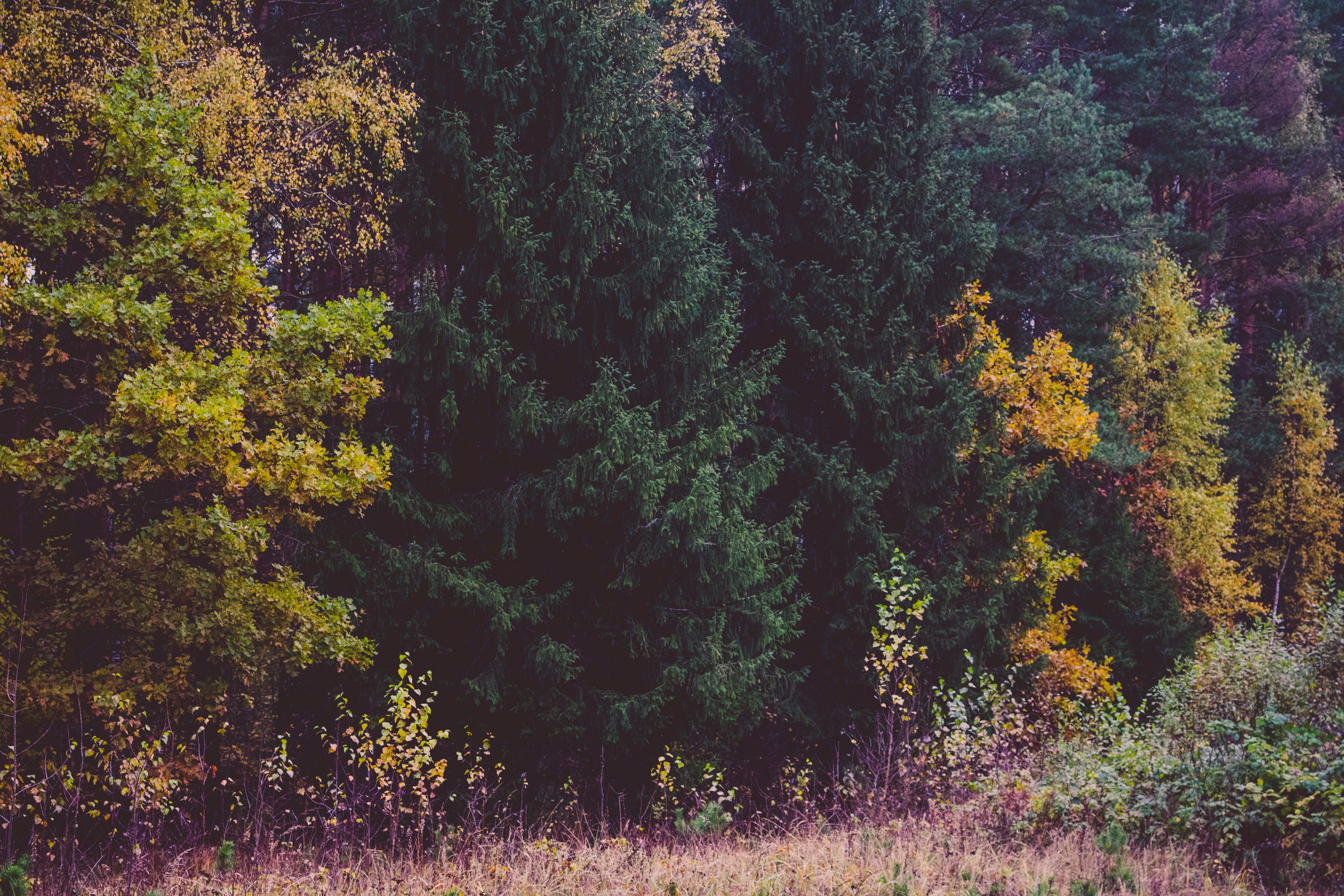 autumn, autumn colours, countryside