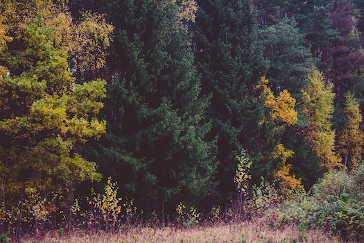 Free stock photo of dawn, landscape, nature, forest