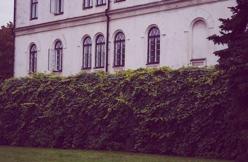 Бесплатное стоковое фото с арочное окно, архитектура, вьющееся растение, газон