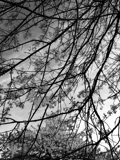 ağaçlar, bakmak, dalları, gökyüzü içeren Ücretsiz stok fotoğraf