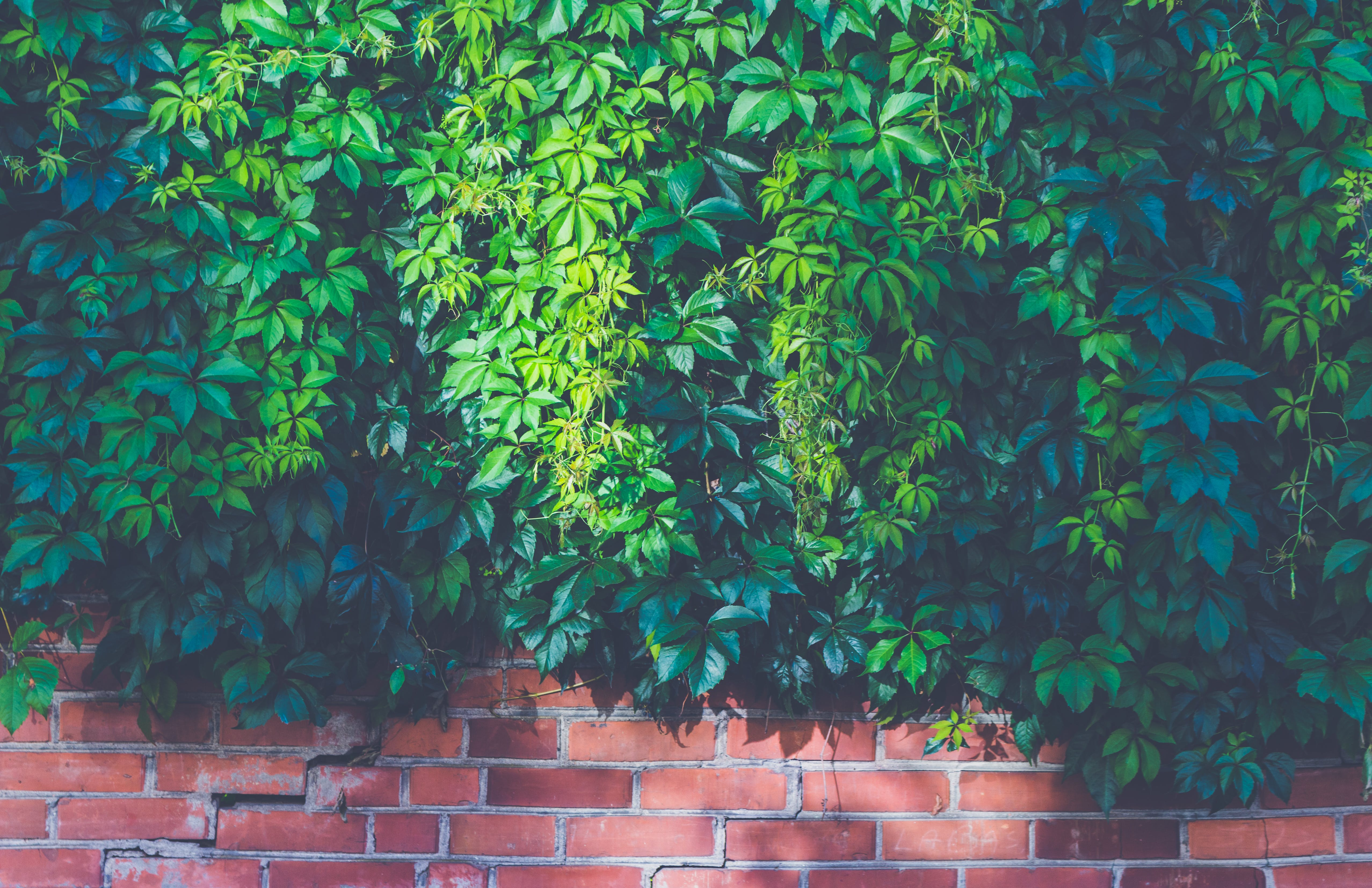 Green Outdoor Plants on Brown Brick Wall