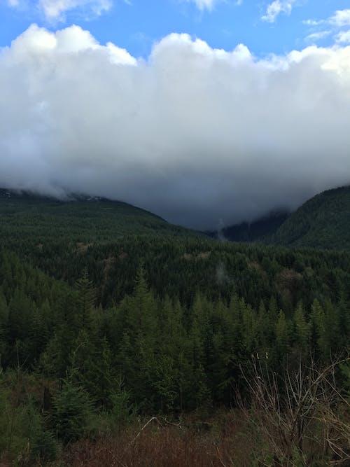 ağaçlar, başgösteren, bulutlar, dağlar içeren Ücretsiz stok fotoğraf