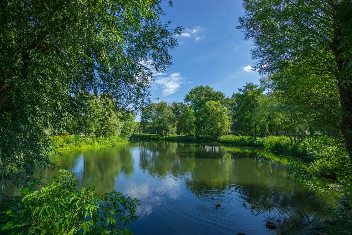 Зеленые деревья и озеро Фото