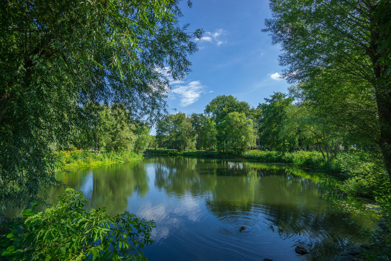 Panoramic Photo Of Bushes Near Pond 183 Free Stock Photo