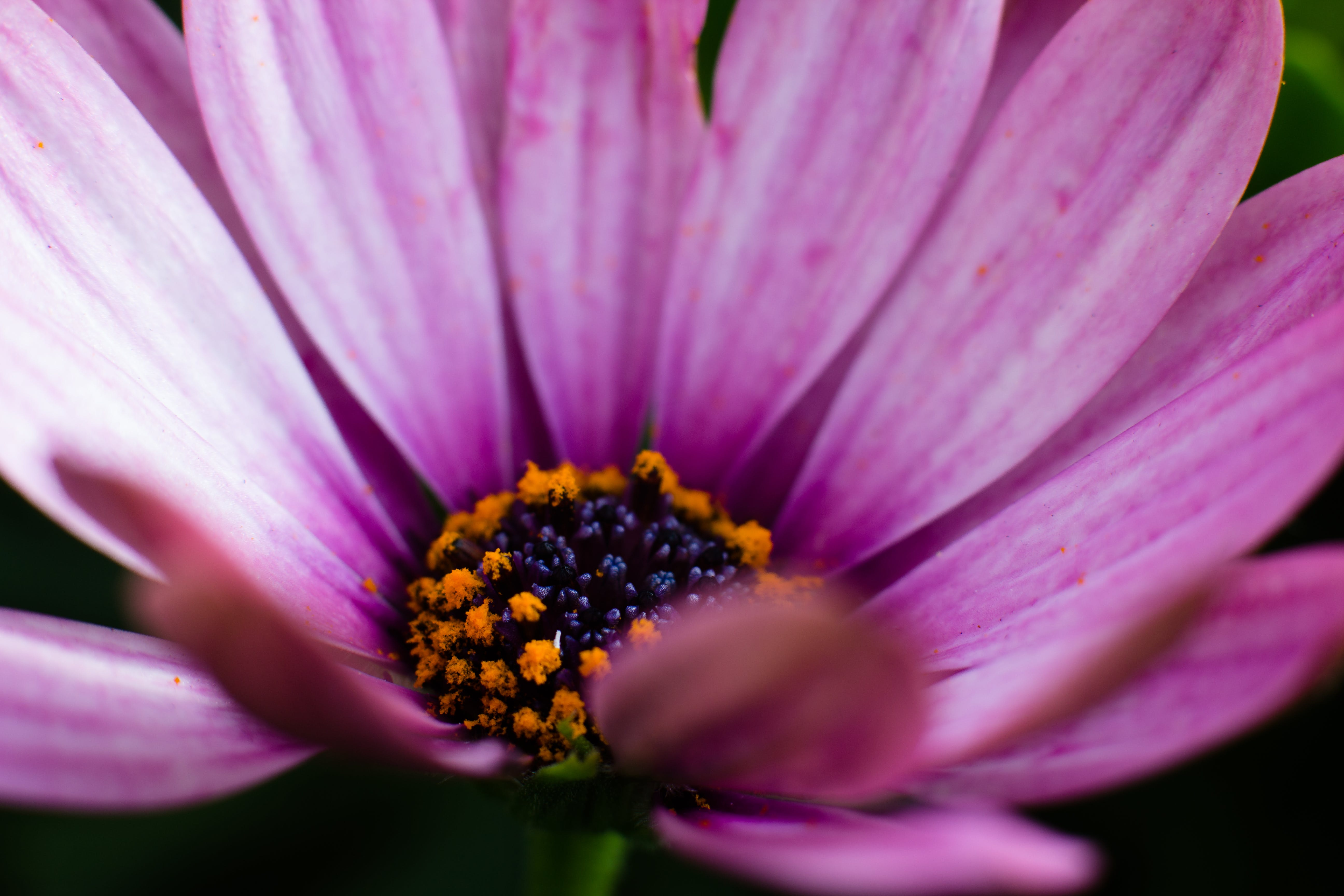 Free stock photo of flower, macro, photo