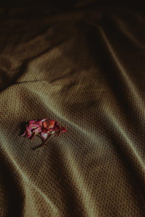 Gratis lagerfoto af årgang, blomster, farve, kunst