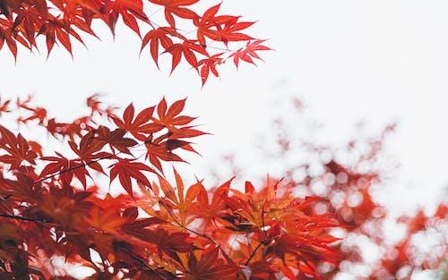 Orange Trees in Closeup Photography