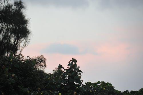 ağaçlar, Avustralya, bulutlu gökyüzü, gün batımı içeren Ücretsiz stok fotoğraf