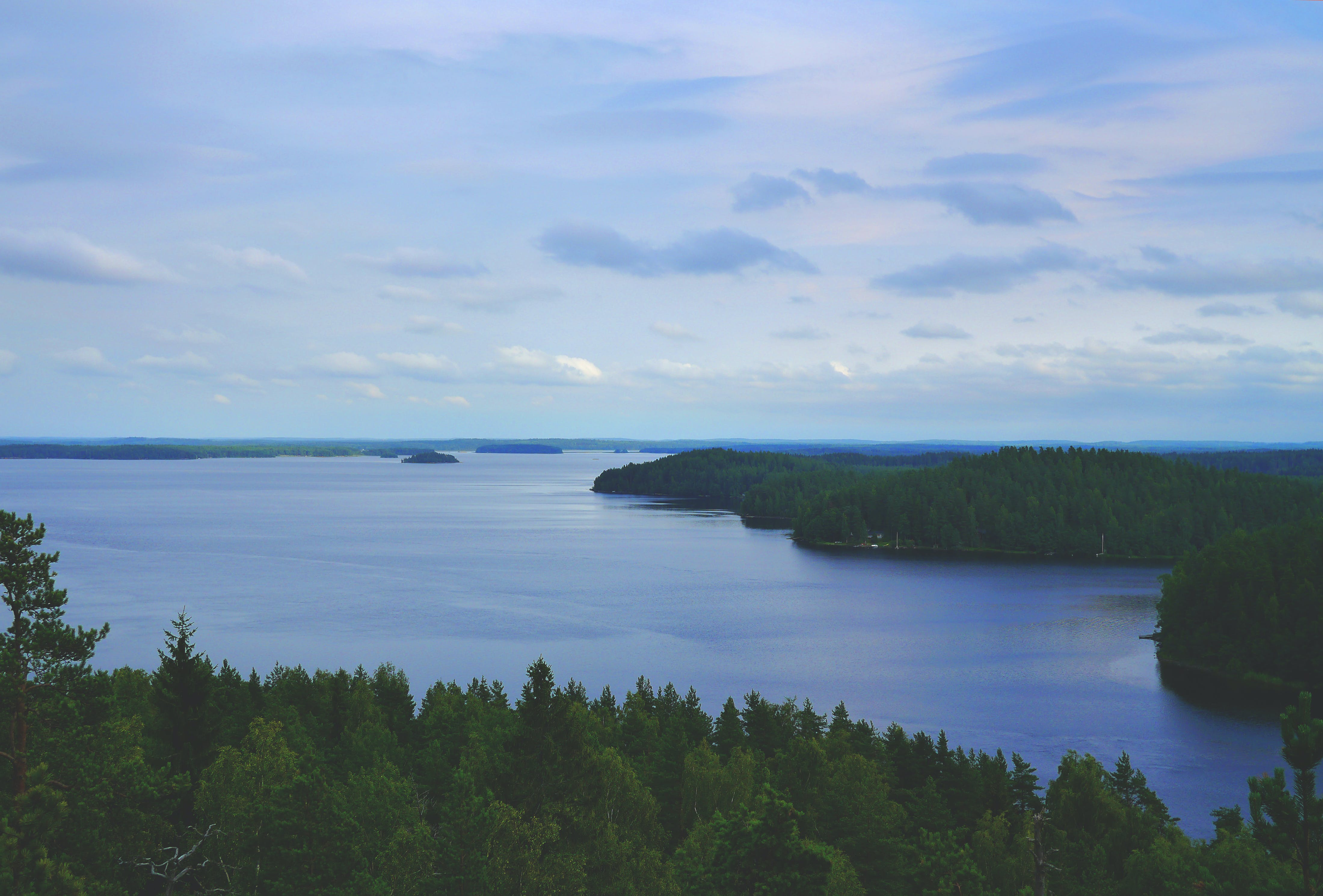 Fotos de stock gratuitas de agua, arboles, bosque, cielo