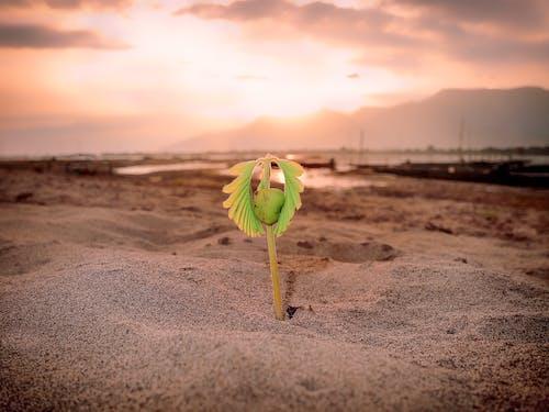 Photos gratuites de bourgeon germinatif, centrale, coucher de soleil, en germination