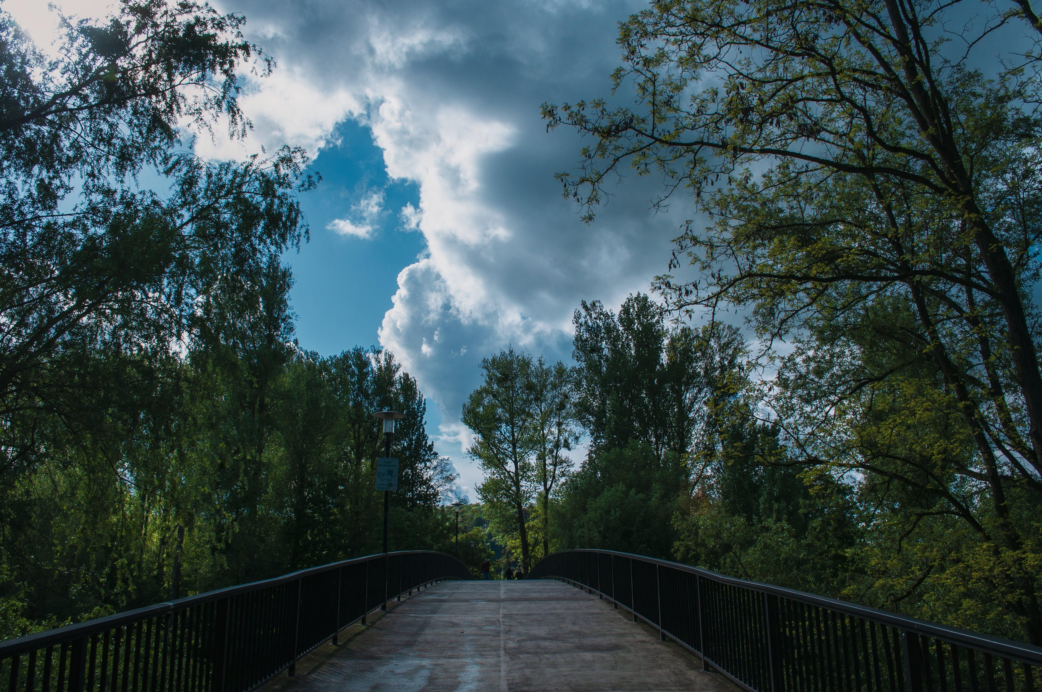 天空, 橋, 綠色, 藍色 的 免费素材照片