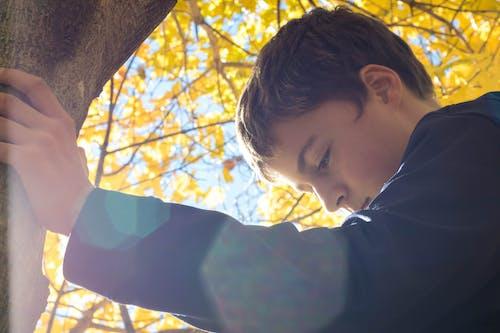 Fotos de stock gratuitas de adorable, al aire libre, árbol, caer