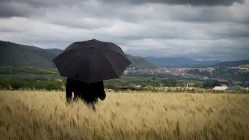 Fotos de stock gratuitas de aire, campo de trigo, cielo, dramático