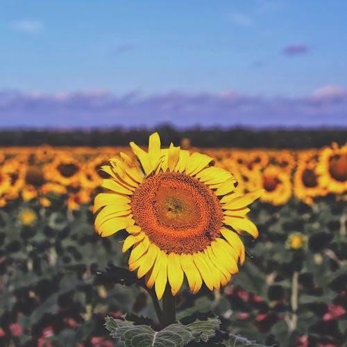Безкоштовне стокове фото на тему «вродлива, квітка, літо, пейзаж»