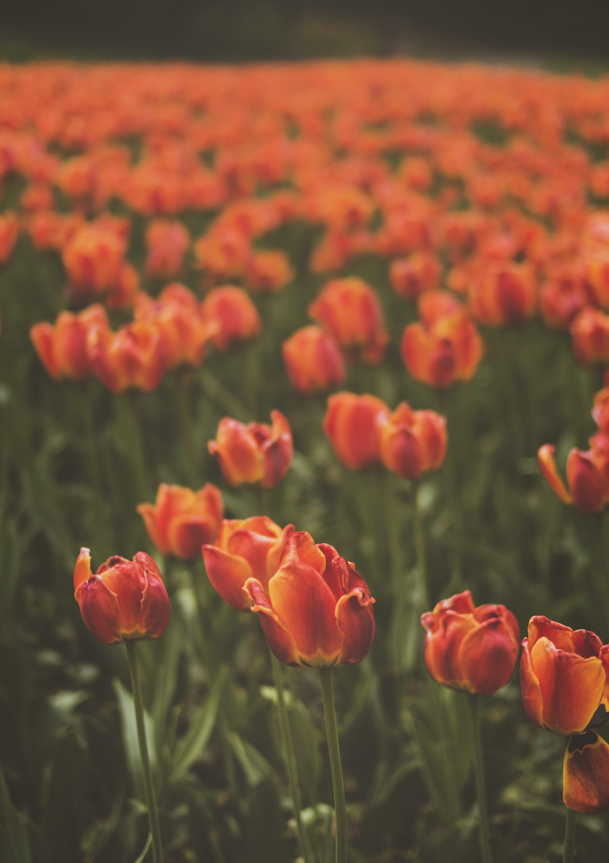 Kostenloses Stock Foto zu blumen, blütenblätter, bunt, farbe