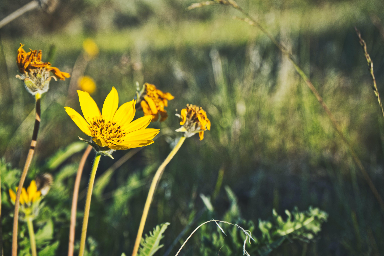 Foto d'estoc gratuïta de flors silvestres, mat, molla