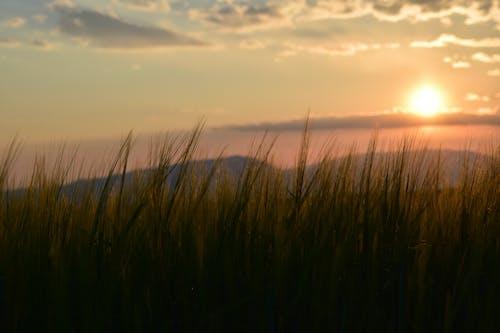 คลังภาพถ่ายฟรี ของ ดวงอาทิตย์, ท้องฟ้า, ทุ่งหญ้า, พระอาทิตย์ขึ้น