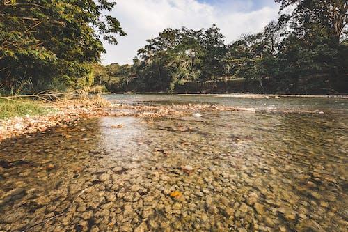 Free stock photo of beautiful landscape, nature, river