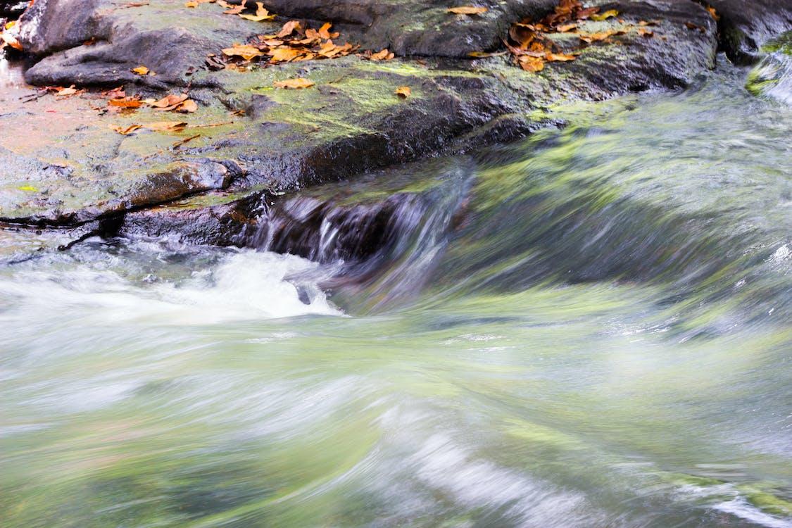 agua, folyó, kő